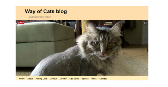 Pet Blog - Way Of Cats